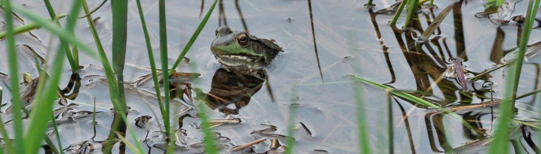Spring Pond Credit Jerry Hiam PutneyPics