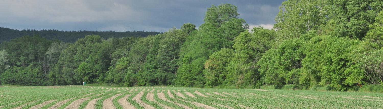 Spring Corn Field Credit Jerry Hiam PutneyPics